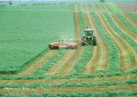 alfalfa cutting