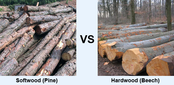 Difference between hardwood and softwood cell structure